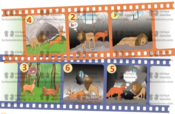 6. sınıf MEB Yayınları Aslan, Tilki Bir de Geyik Metni Etkinlik Cevapları - Olayların Oluş Sırasına Göre Numaralandırılması