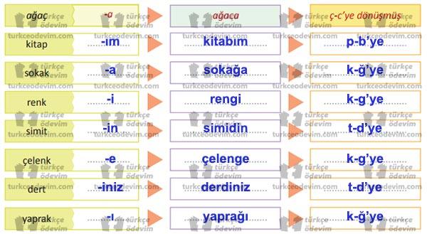 6. Sınıf MEB Yayınları Şehit Bacı Metni Etkinlik Cevapları - Ses Değişimleri
